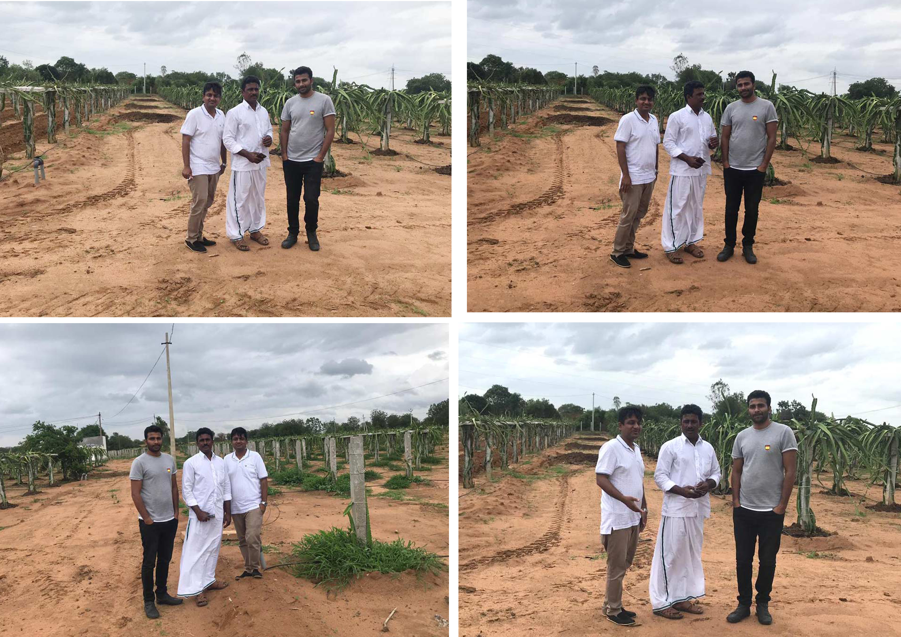 Visit by fellow dragonfruit farmers from Andhra Pradesh to Deccanexotics