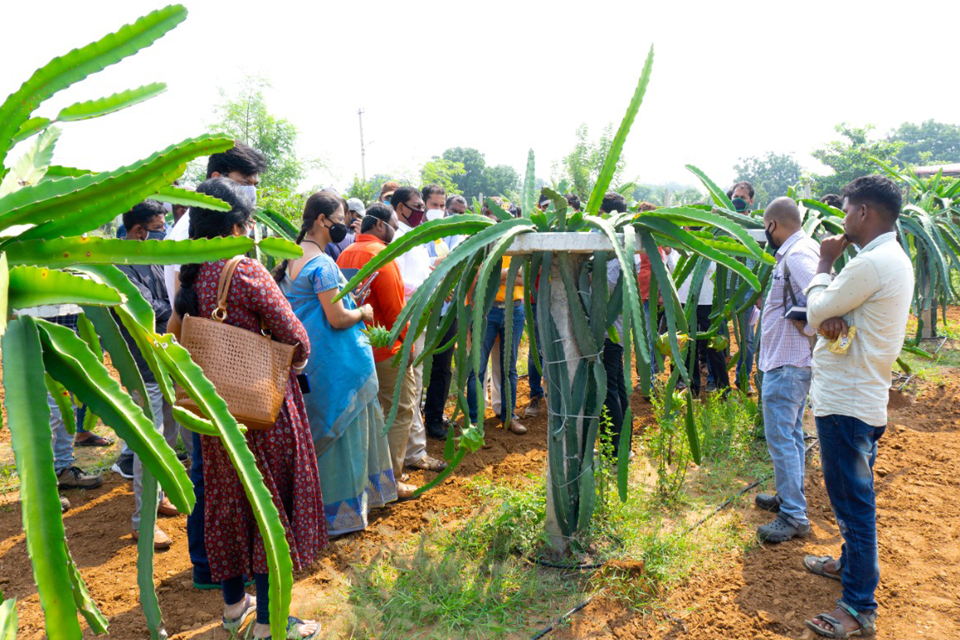 Farm visit to Deccan exotics dragon fruit farm continues and farmers across India