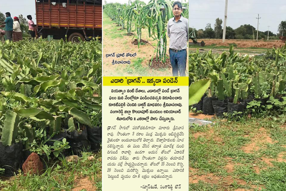 Our largest dragon-fruit farm story printed one of most popular Eenadu newspaper in AP & Telanagna this Month 10-August-2019.