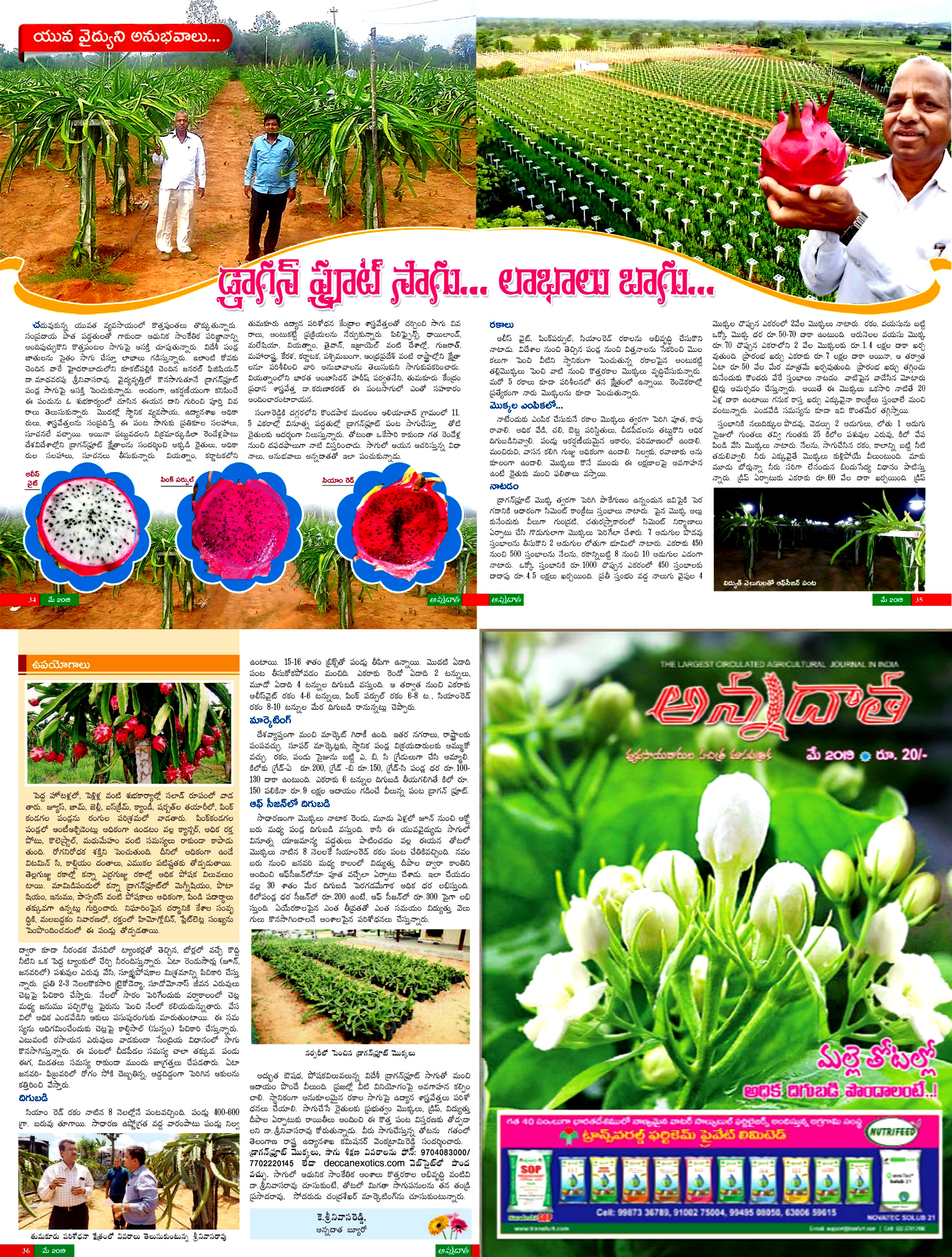 Our largest dragonfruit story printed in Annadata (ETV & EEENADU)