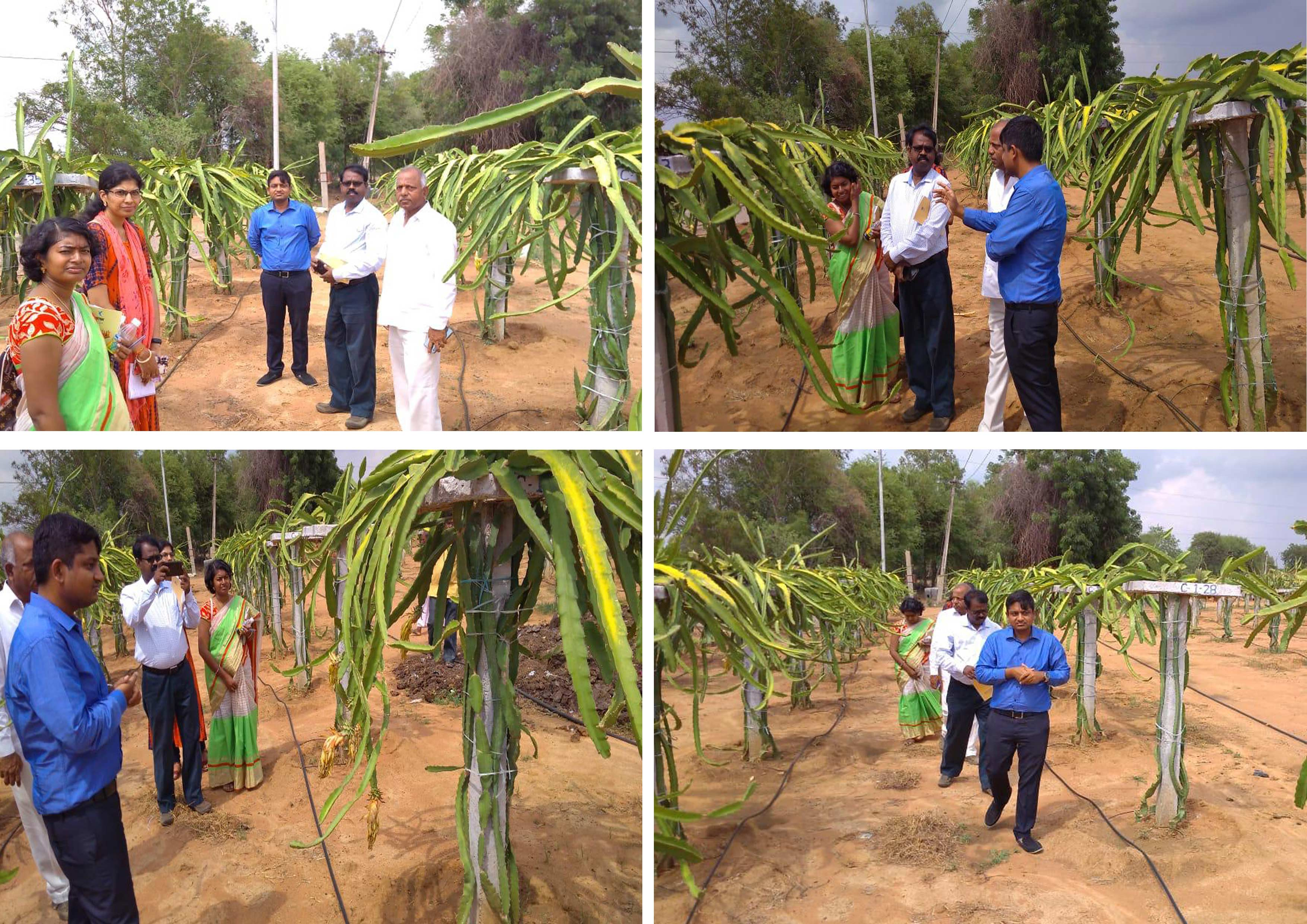 Visit to our farm by NABARD representatives Mr.Santhanam and Telangana co Bank